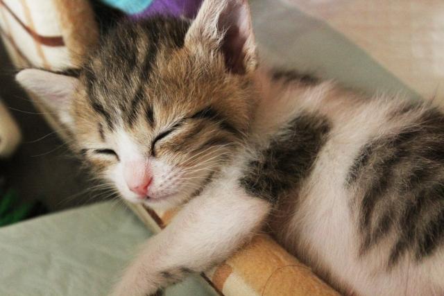子猫を飼育する際のケージの大きさは?ケージを選ぶポイント!