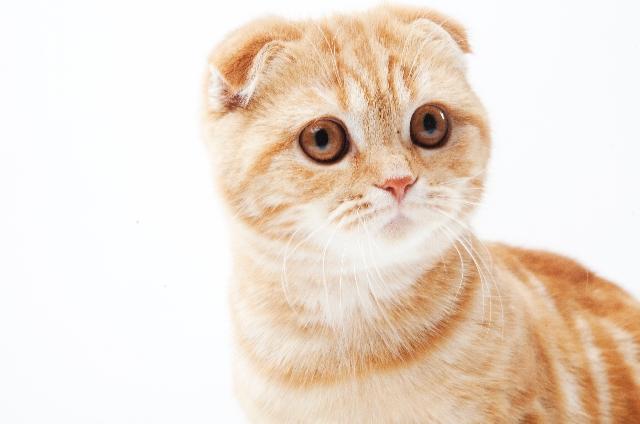 猫の鼻が赤い原因は?猫の鼻や口は健康のバロメーター!