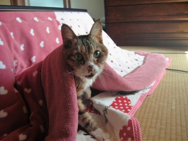 大学生の一人暮らしで猫を飼いたい人はココに注意!